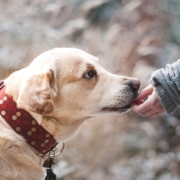 Liability Insurance for Dog Bite Claims Seattle, WA