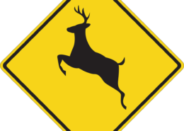 How to lower your risk for a deer collision